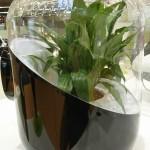 ANDREA système de filtration de l'air par les plantes