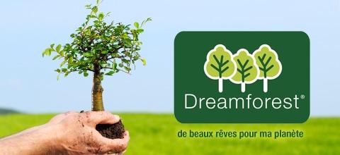 dreamforest